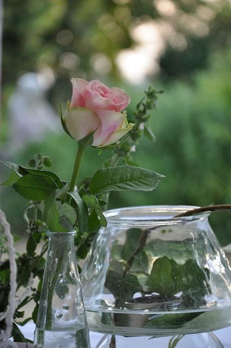 deco rose